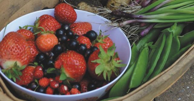 Derbyshire Harvest