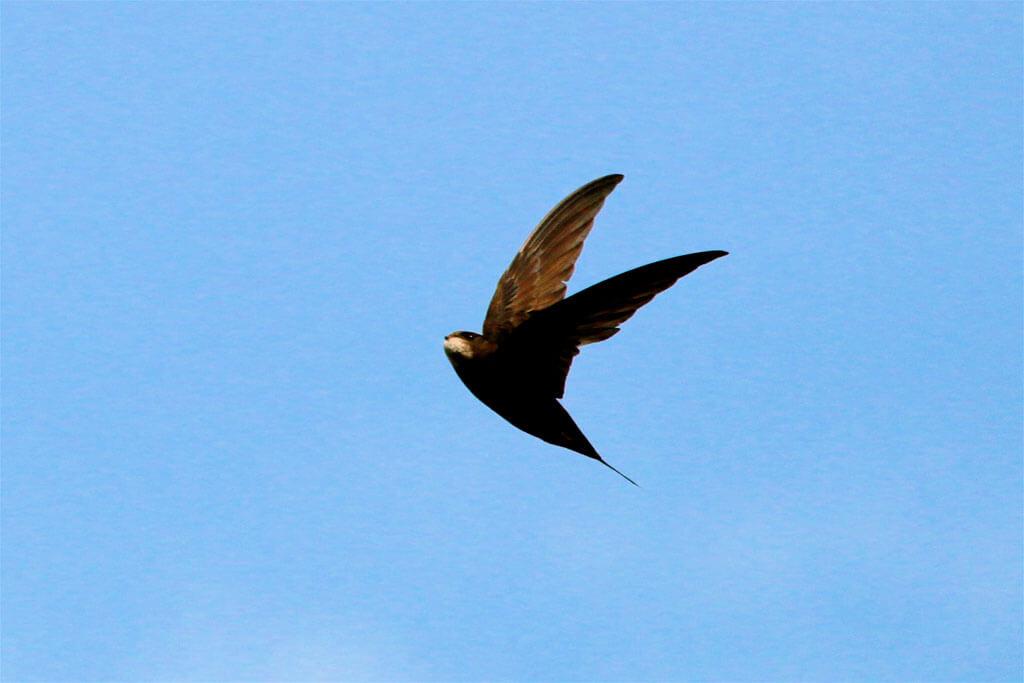 derbyshire wildlife, derbyshire birds,