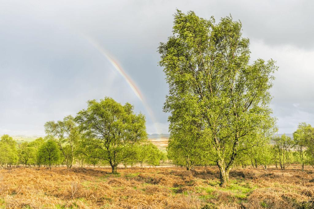 Birchen-Edge-Rainbow