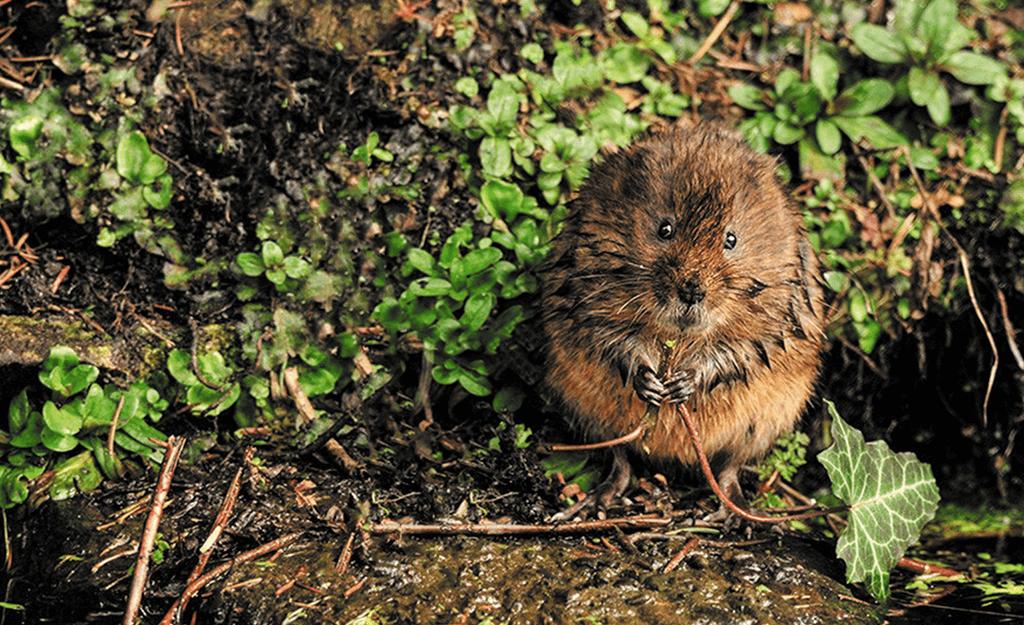 derbyshire wildlife,